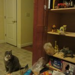 The toys emptied out my pantry!