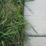 My grass touches the sidewalk