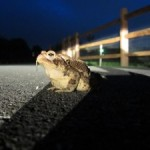 The frog in my headlights