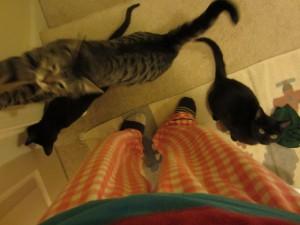 The cats were guarding the door.