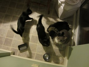The cats are waiting to be fed.