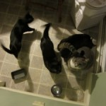 Don't feed your cats at 5:00 a.m. and other bad habits you don't want to start