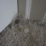The cats shredded the carpet.