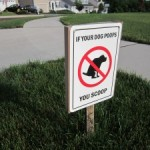 If your dog poops – you scoop, and 10 other rules of life
