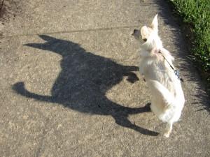 A shadow has no power.