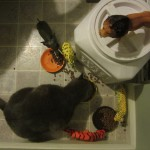 A guest post from Pooh Hodges. He ate breakfast with the toys this morning.