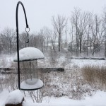 Shovelling a path to the bird feeder reminds me of a story about a father who loved birds