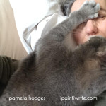 Why it is hard to take a nap when you have a cat
