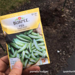 A lesson on life from planting sugar snap peas