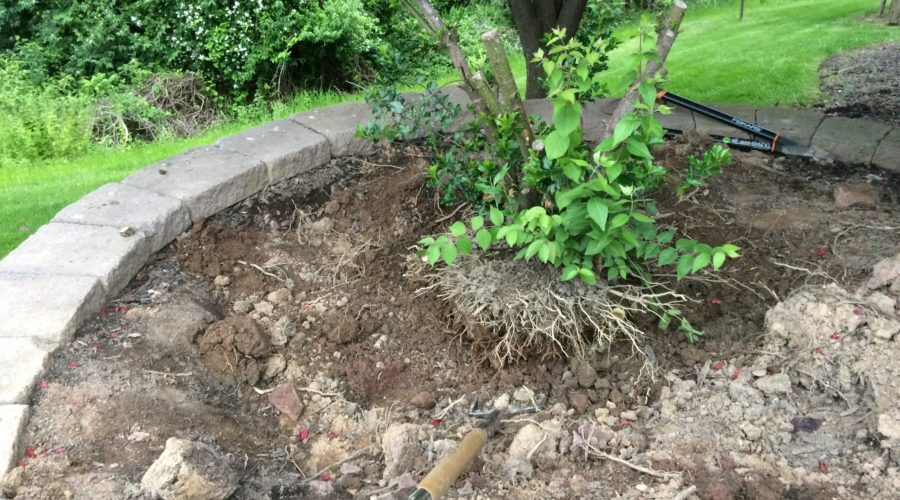 Finding hope while digging up a root ball
